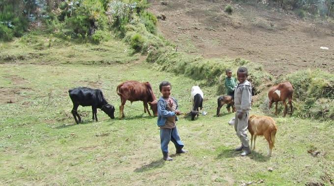 Sansa Mukana Etiopian Oromonkielisessä Radiolähetystyössä 35 Vuotta