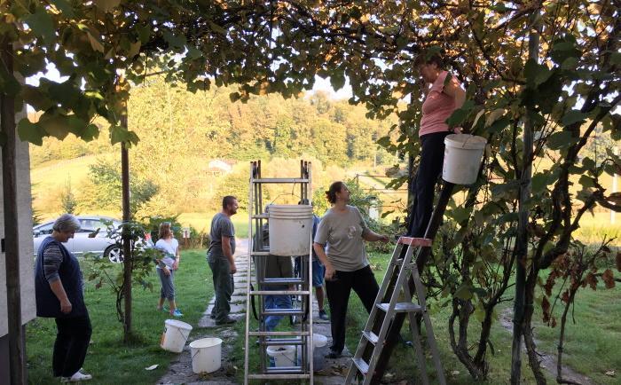 Viininviljelystä Ja Maalaisarjesta Paratiisimaisessa Kroatiassa